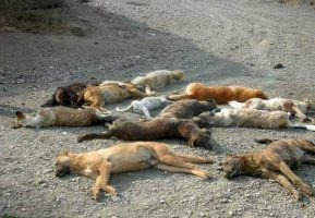 فیلم| قتل عامل سگ ها در جنوب کشور