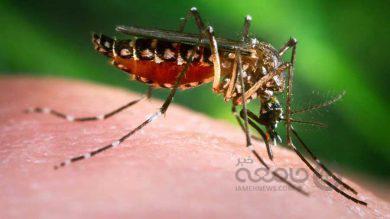پشهها در دو جزیره چین نابود شدند