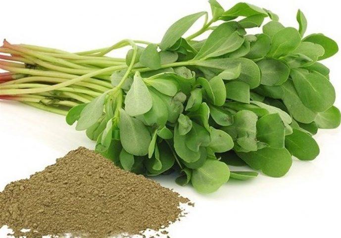 یک نوع سبزی خوردن 99 درد را درمان می کند!