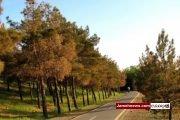شهرداری تهران به درختان چیتگر آب نمی دهد