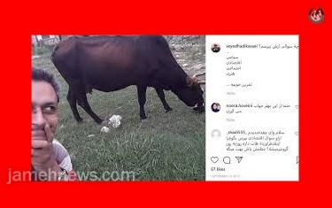 حاشیه های دادگاه رسیدگی به پرونده عکس سلفی خبرنگار با یک «گاو»
