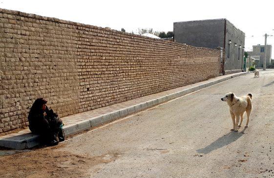 فیلم| جنوب تهران در محاصره سگ ها| شهرداری تهران سگ ها را رها می کند؟!