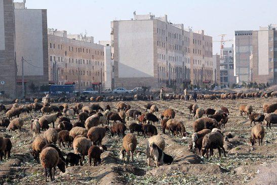 عکس  شهر «کهریزک» از نگاه دوربین «سید هادی کسایی زاده»