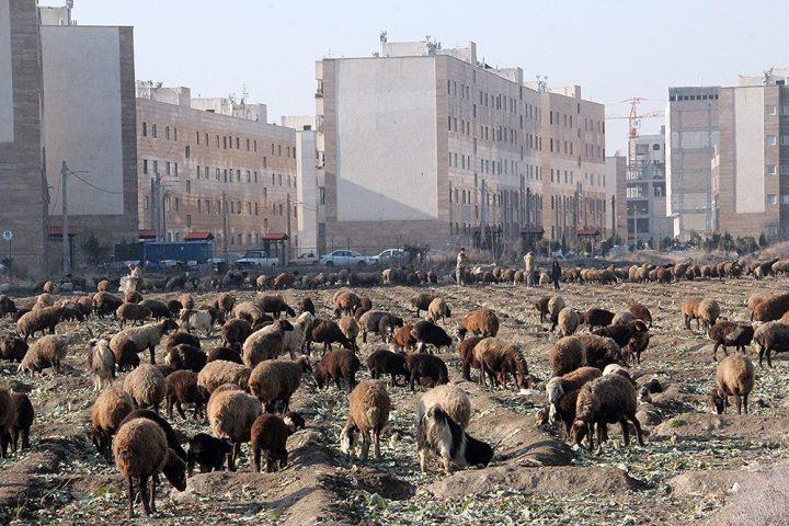 عکس| شهر «کهریزک» از نگاه دوربین «سید هادی کسایی زاده»