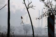 عکس| «شهرستان ری» در وضعیت بحرانی آلودگی هوا