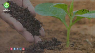 کود گوگرد و کود سیاه برای درختان در کشاورزی چه کاربرد و فوایدی دارند؟