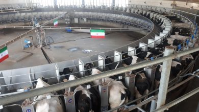 فیلم| تیزر دامداری شیر و گوشت احسان| افتتاح شیردوشی «روتاری»