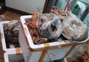 افزایش سرو «خرچنگ و هشت پا» همراه با غذاهای حرام در رستوارن های تهران