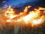 آتش سوزی تالاب هامون مهار شد