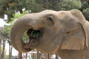 عکس| باغ وحش تهران و گول زدن مردم به اسم شیرایرانی