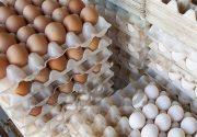 عرضه تخم مرغ تنظیم بازار به قیمت ۴۹۳ تومان در میادین