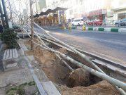 عکس  پایان کاشت درختان چنار در خیابان ولیعصر(عج) تهران