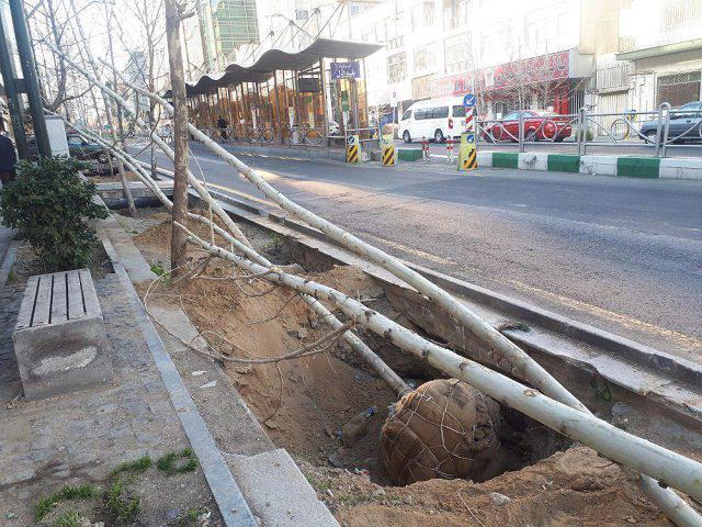 عکس| پایان کاشت درختان چنار در خیابان ولیعصر(عج) تهران